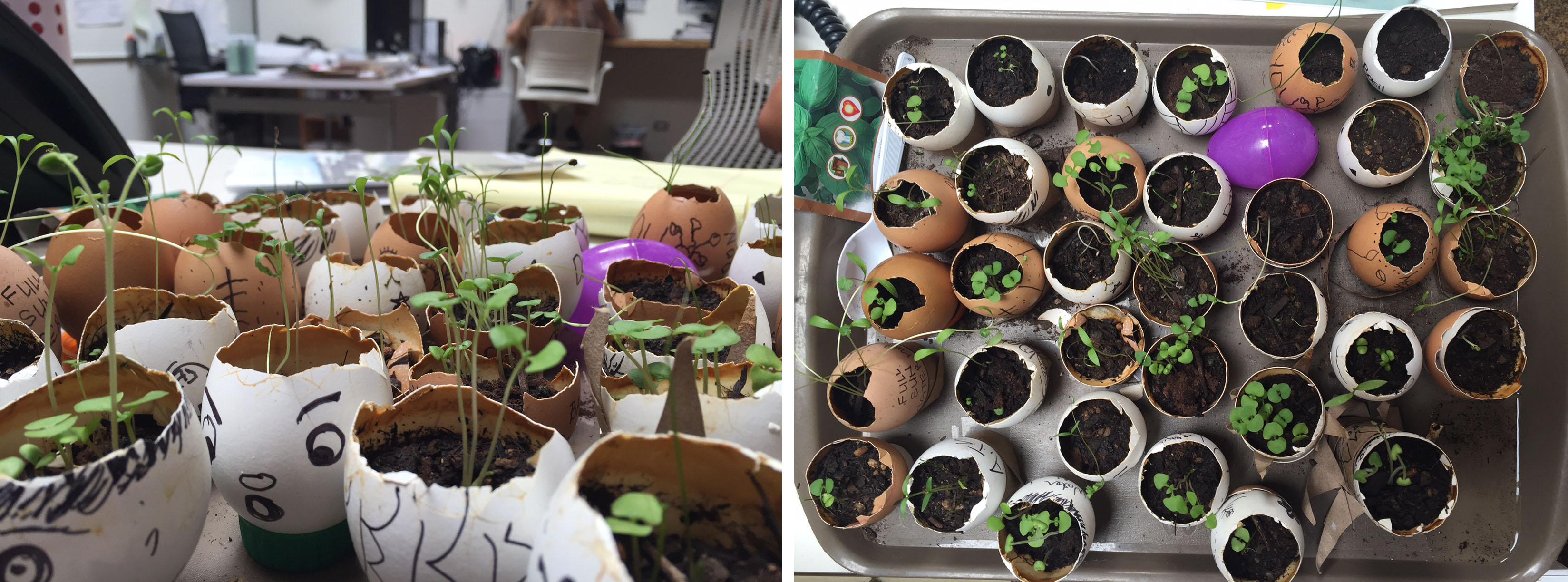 2016 Earth Day at KYA: Seed Blog 3