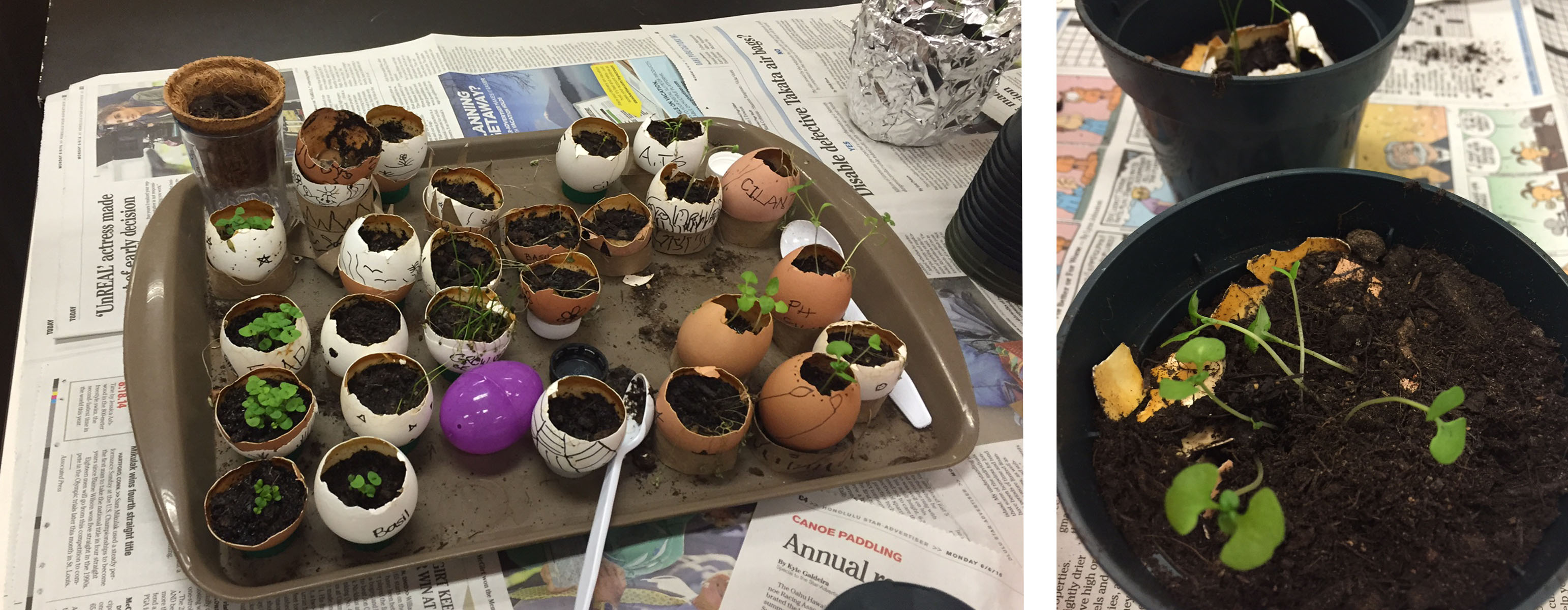 2016 Earth Day at KYA: Seed Blog 4